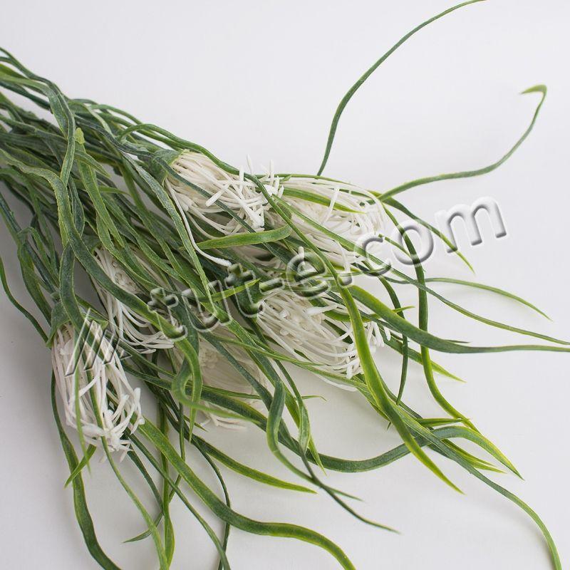 Кудрявая травка с белыми соцветиями - Изображение 2