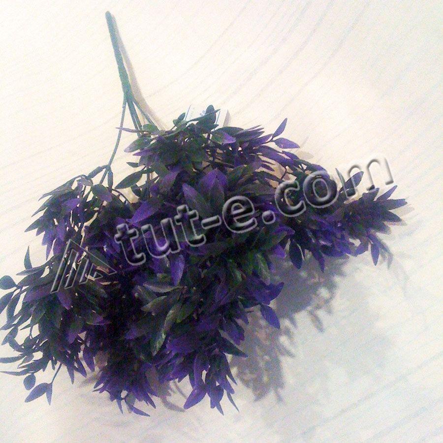 Травка с ярко фиолетовой листвой