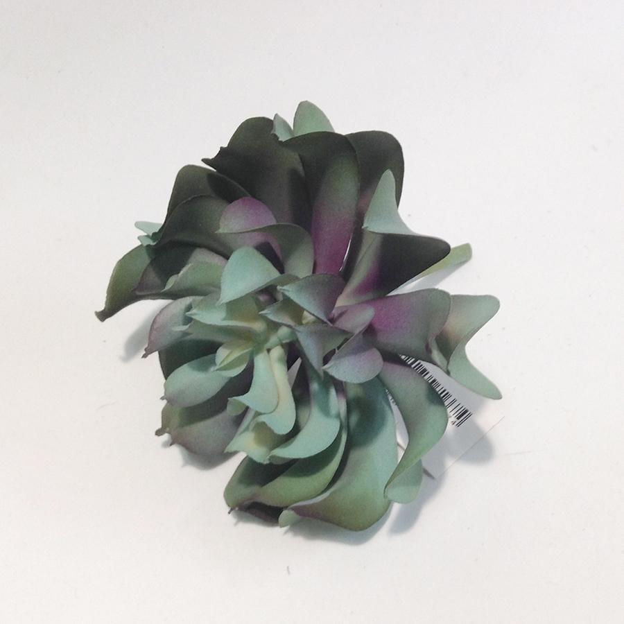 Суккулент эхеверия -розочка сине-зеленая