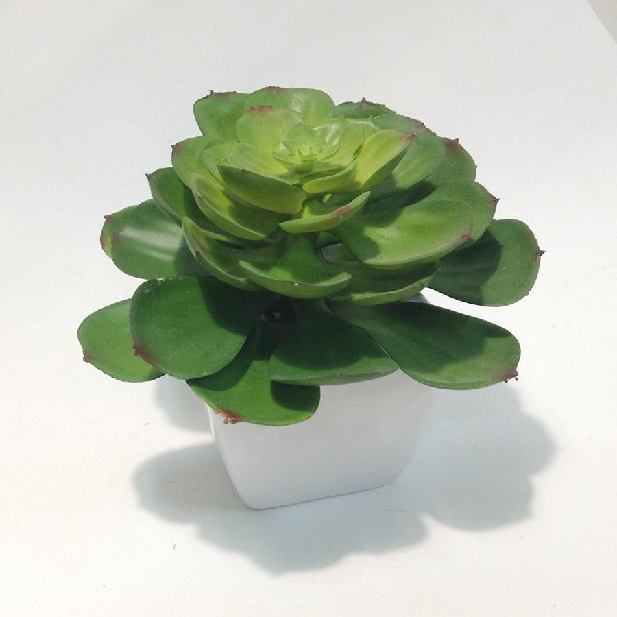 Суккулент в керамическом квадратном горшочке