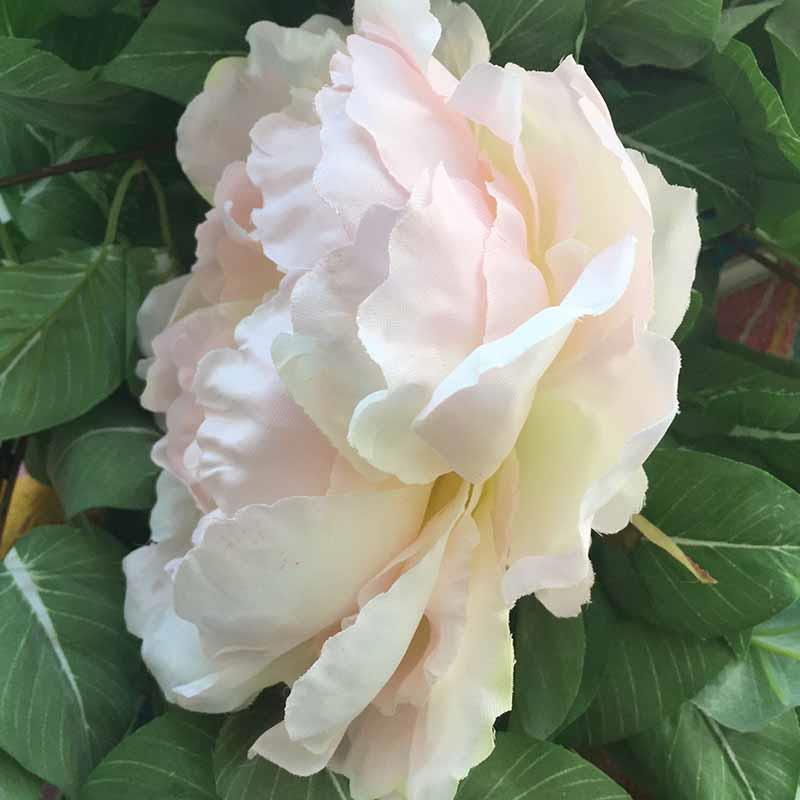 Головка пиона пышная цвет цветущей яблони - Изображение 2