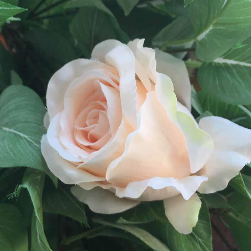 Головка розы КАРДИНАЛ нежно-пудровая