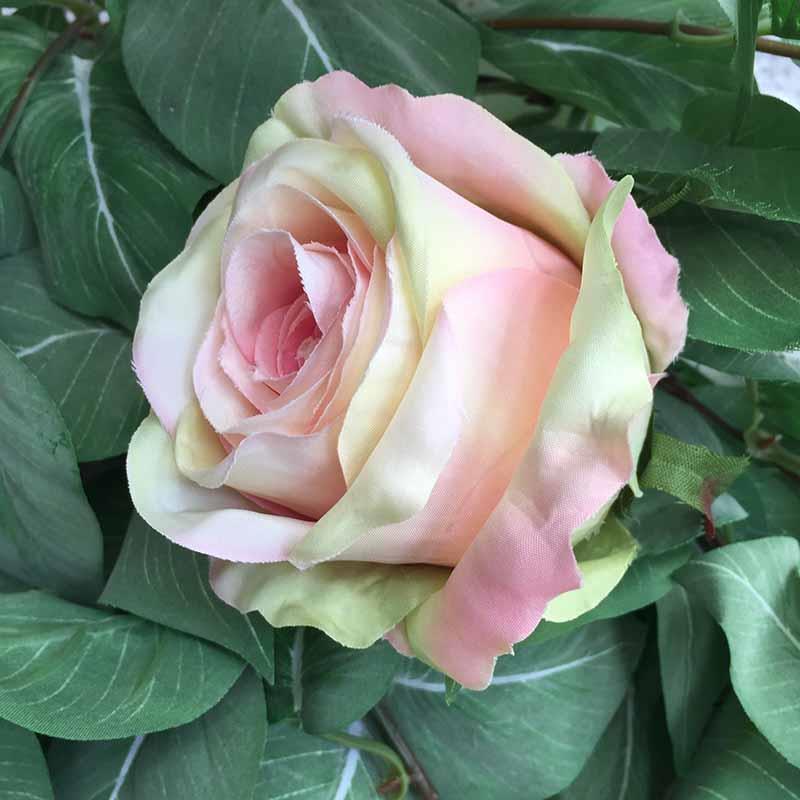 Головка розы КАРДИНАЛ салатово-пудровая светлая